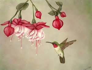 hummingbird-fuschia